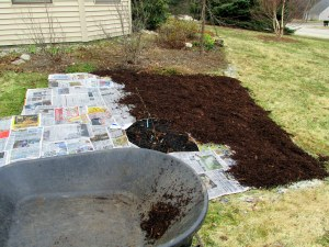 D - more cardboard and more newspaper, plus mulch