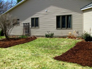 Sheet-mulch for veggies will go where the ground ivy and grass are now.