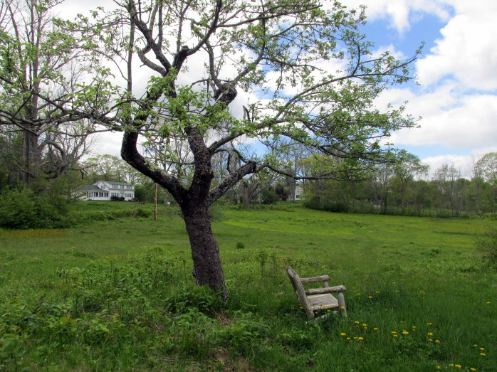 apple tree and bench near entrance