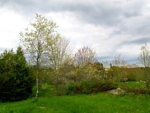 views at Penny Lake meadow