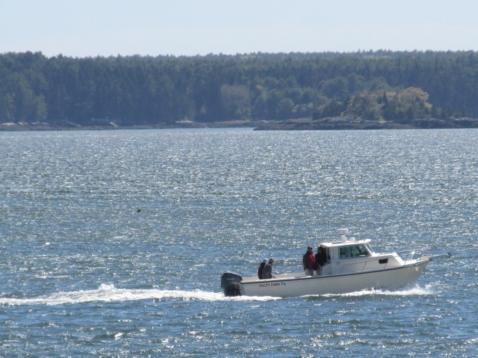 Salty Paws motor boat on Sheepscot