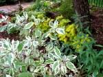 shade garden colours, late Aug 2013