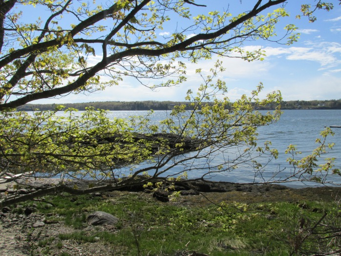 view of Sheepscot River through trees