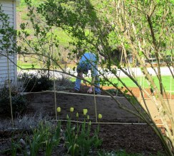 Tomworkingonbamboofence11May2014