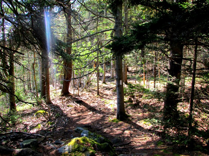 trail with shaft of sunlight