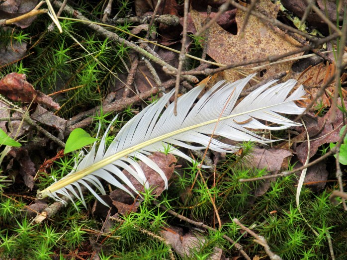 feather on trail