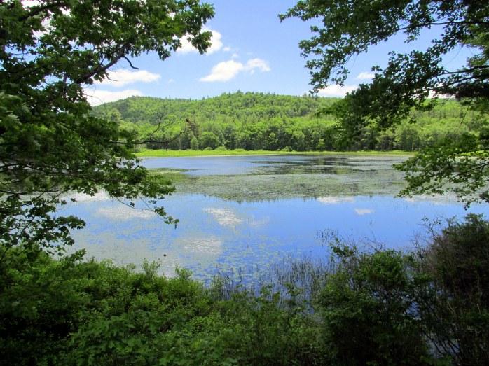 Horseshoe Pond