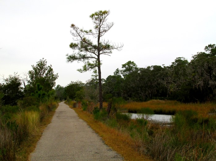 bike path, Clam Creek marsh, Christmas Day  2013