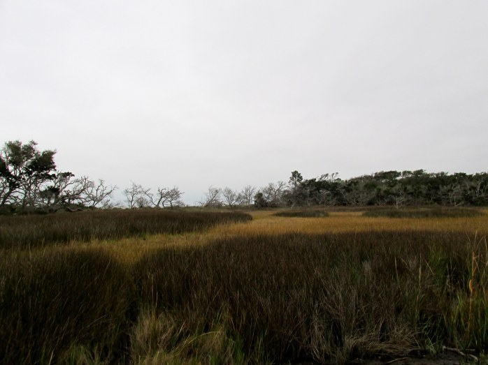 marsh with many dark reeds, Clam Creek marsh, Dec. 2013