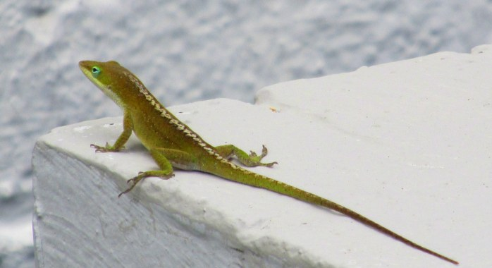 gecko in sculpture garden