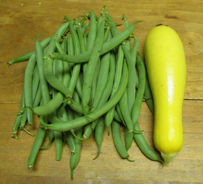 green beans and summer squash, Aug. 2013