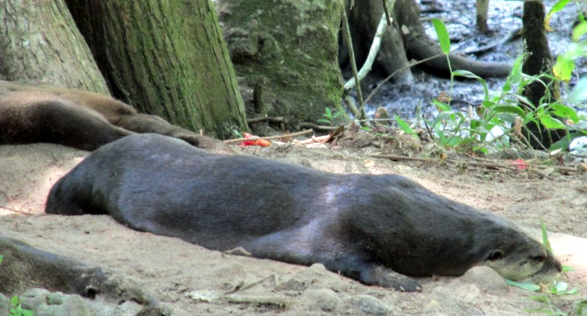 hot otters in dirt