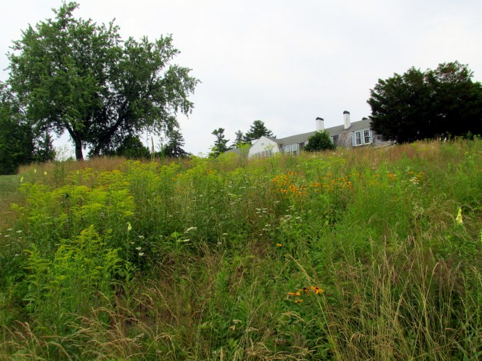 house peeking above meadow