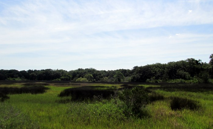 inland marsh with reeds, June 2014