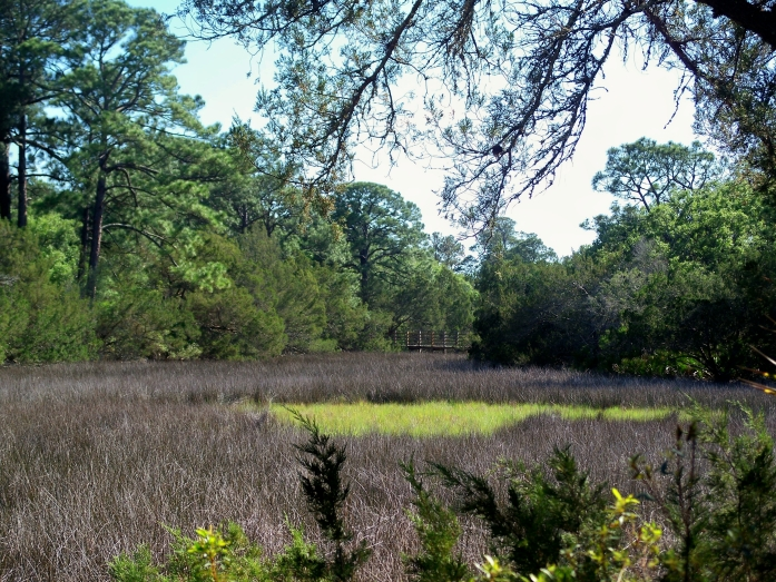 Mid-Island marsh, April 2012
