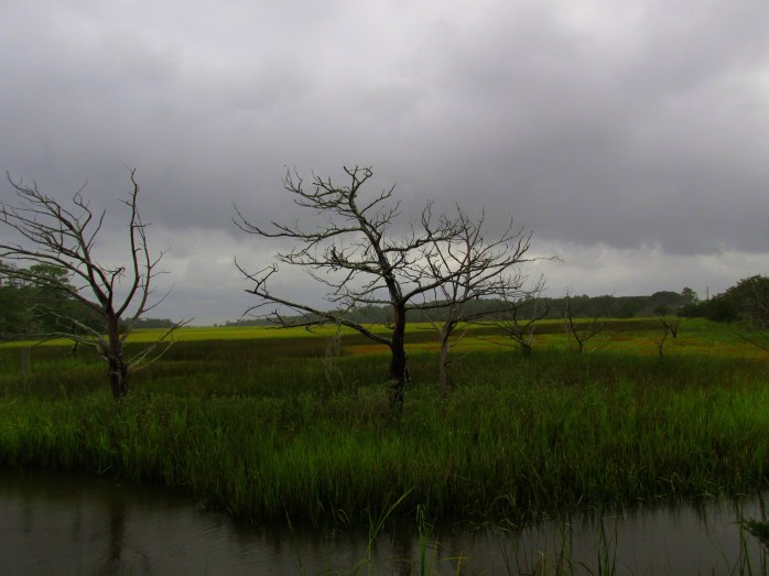 dead trees and stormy sky, Clam Creek marsh, Sept. 2013