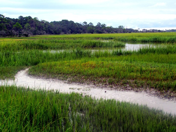 Clam Creek marsh, Sept. 2013