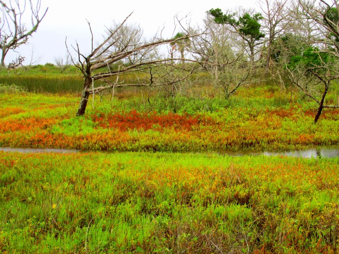 marsh colours, Clam Creek marsh, Sept. 2013