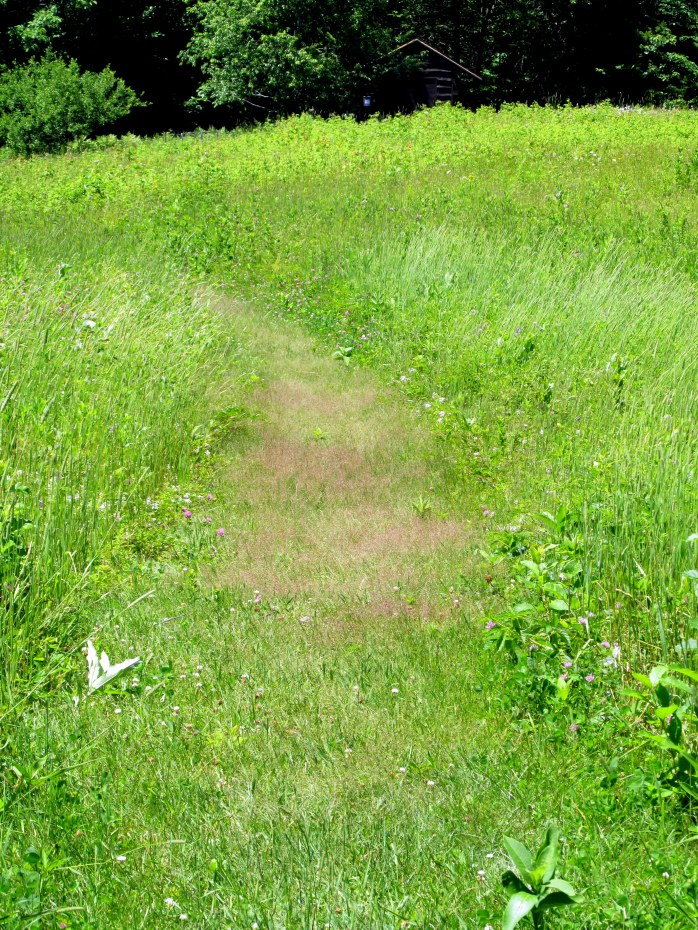 reddish grass in meadow path