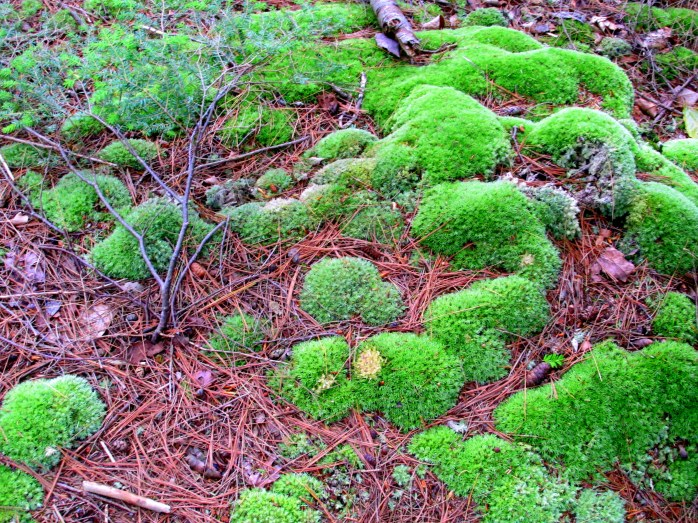 mosses on trail to lake