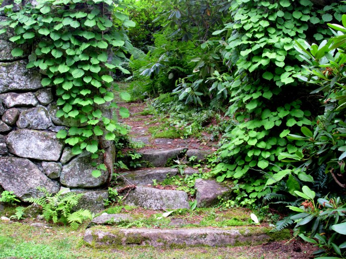 old overgrown steps in Old Garden