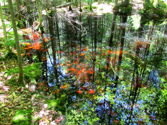 vernal pool reflections