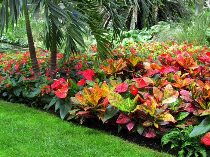 anthurium and other tropical plants in conservatory