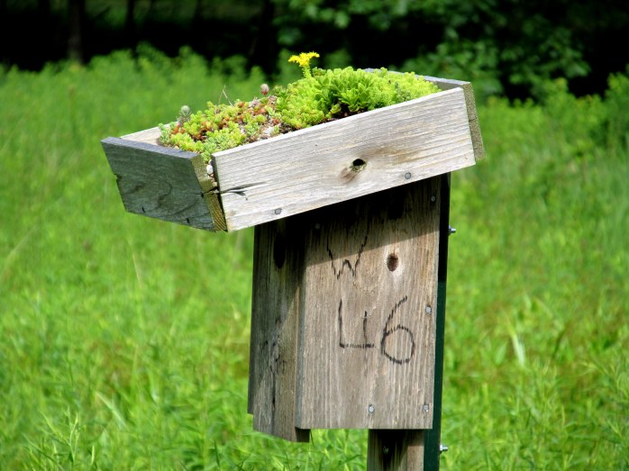 birdhouse with green roof in meadow