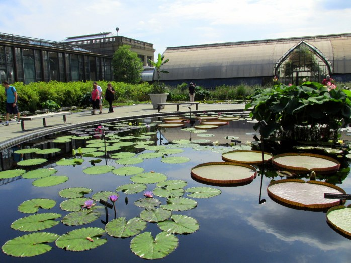 lily pads and Victorias