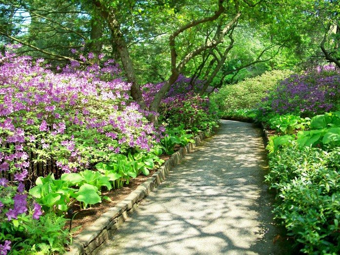 shaded pathway