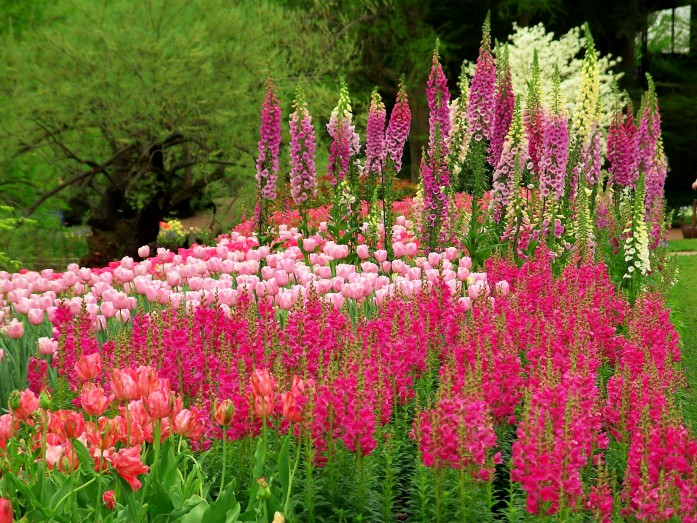 snapdragons, tulips, foxgloves