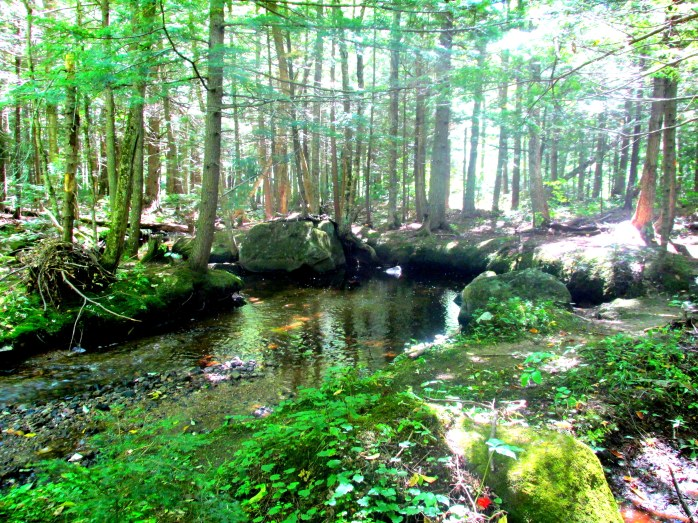 rocks along brook in woods, 7 Sept 2014