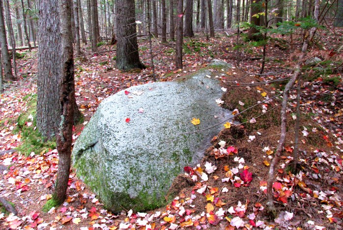 partly covered boulder, 13 Oct 2014