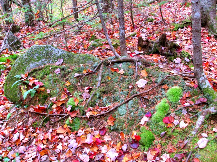 rock with mosses, lichen, ferns, roots, leaves, 13 Oct 2014