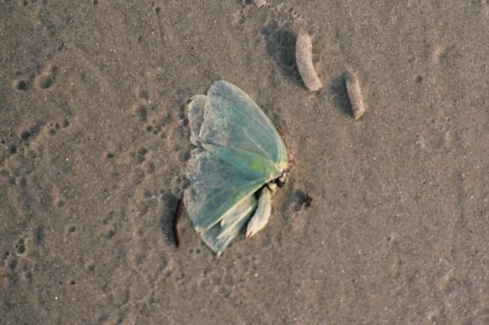 moth, Jekyll Island, GA, Sept 2005