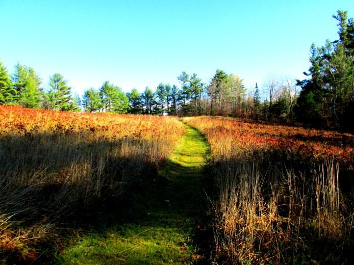fieldwithgrassypathkhnp1Nov2013