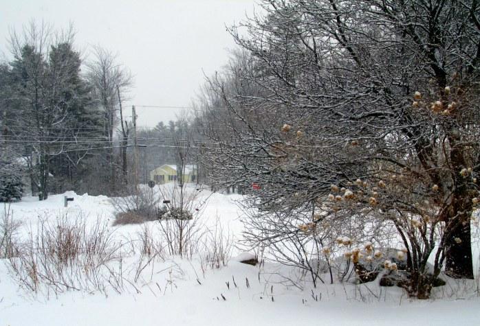 snowing, 30 Jan 2015