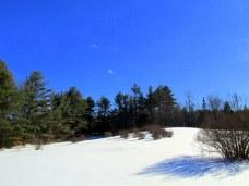 snowfieldblueberrybushesKHNP25Jan2015