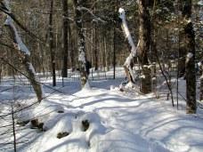 snowytrailKHNP25Jan2015