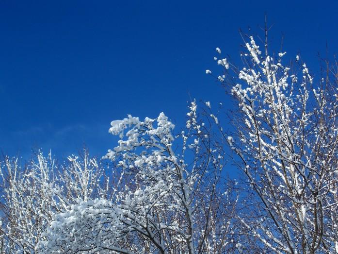 winterskysnowtreesfeb2009