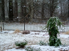 snow, 31 March 2012