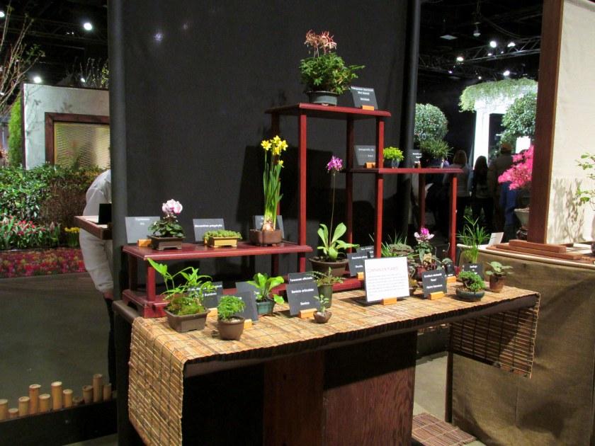 Bonsai Study Group: companion plants for bonsai