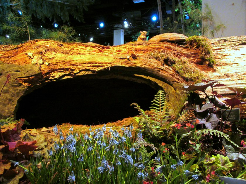 Massachusetts Horticultural Society display: hollow log with grape hyacinths