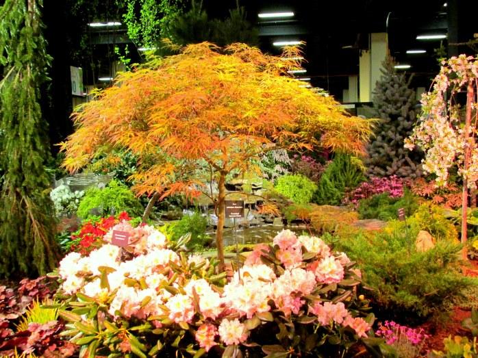 JapanesemapleandrhodosBostonFlowerShow15March2014