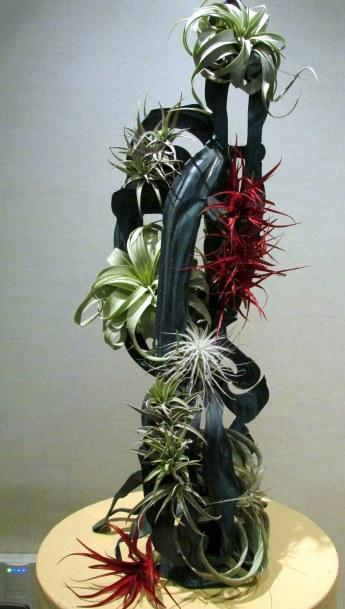 "Tillandsias in ""A New Leaf"" design competition"
