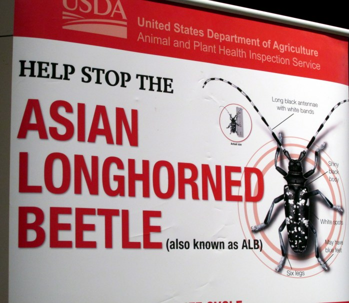 USDA display: Asian Long-horned Beetle