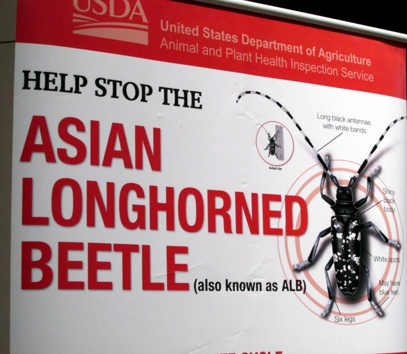 USDA display: Asian Long-horned Beetle