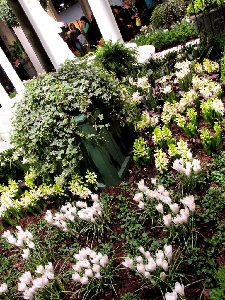 Newport Flower Show display: white flowers