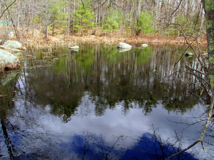 cloud reflections in pond
