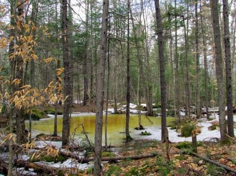 vernal pool through trees